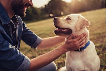 Privat hundetrening