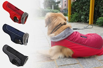 Vintertäcke hund
