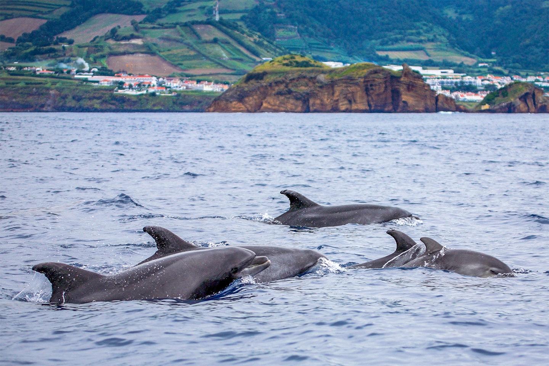 Azorerna  i 8 dagar inkl. flyg, boende och utflykter