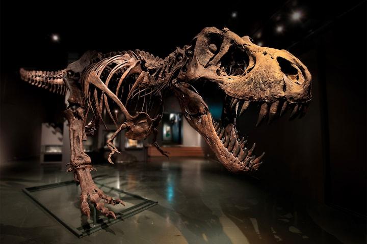 Få dager igjen! Velg mellom to for én eller familiebillett til Naturhistorisk museum