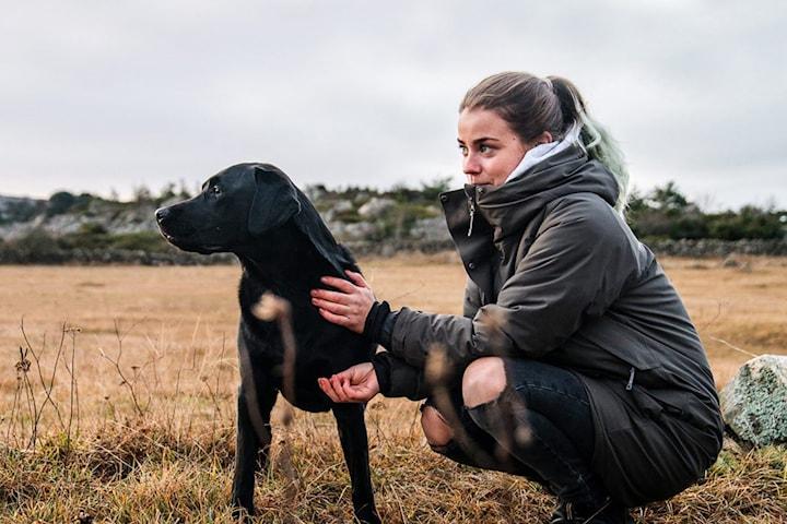 Hundrådgivning online eller 3 privata hundträningar