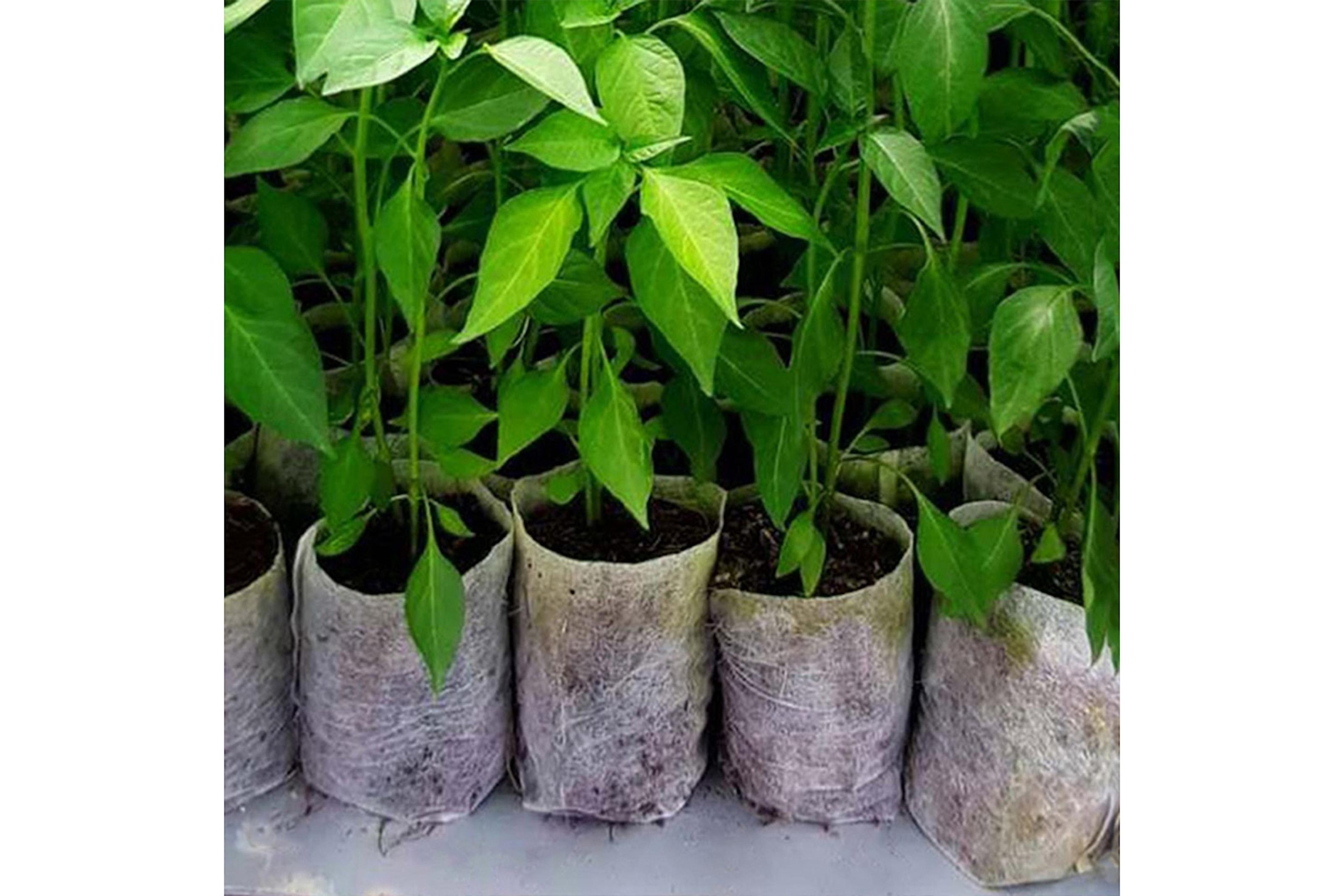 Nedbrytbara odlingspåsar, 100-pack