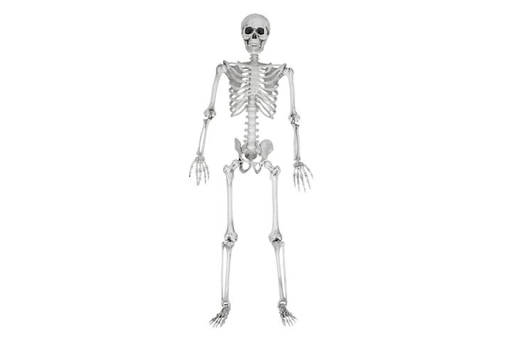 Skjelett, Full Størrelse - 170 cm