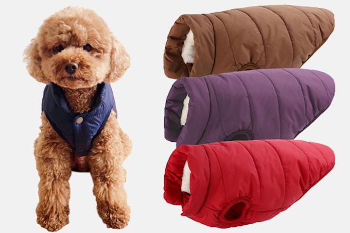 Vinterbekledning til hund