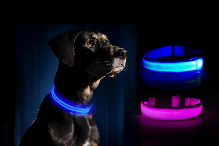 LED-halsband till hund