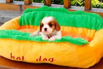 Hundbädd hot dog
