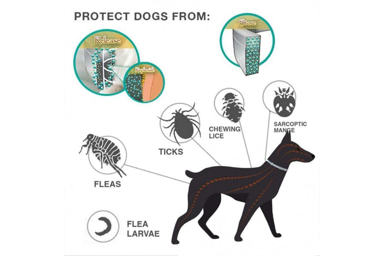 Halsbånd med naturlig insektmiddel