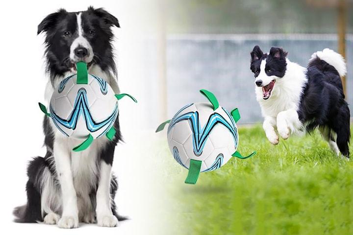 Fotball for hund
