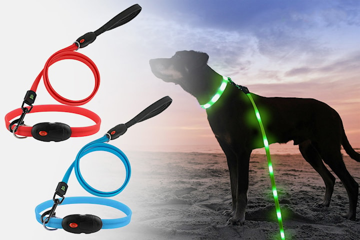 Lysende hundebånd