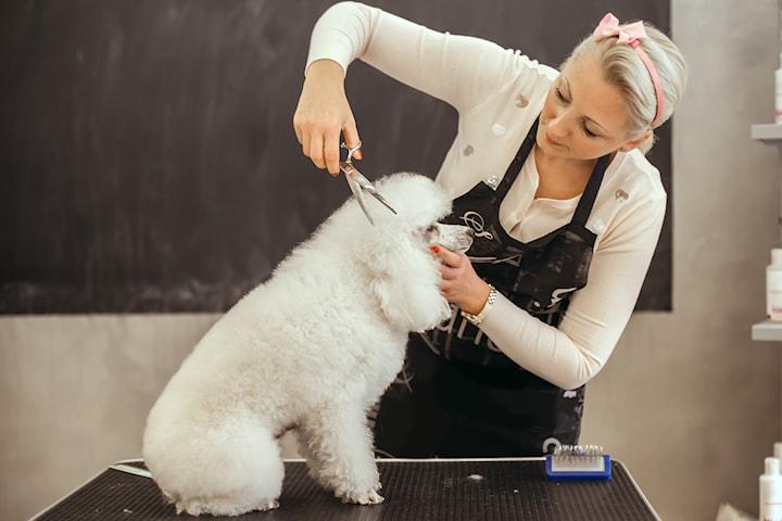 Gi hunden din en komplett pakke for eget velvære. klipp, vask, negleklipp, øre-rens, øye-rens og børsting  hos Zooverden