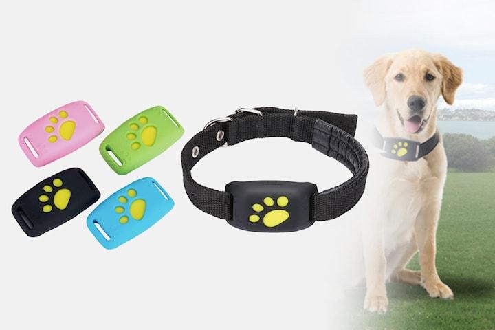 Hundhalsband med GPS-spårare