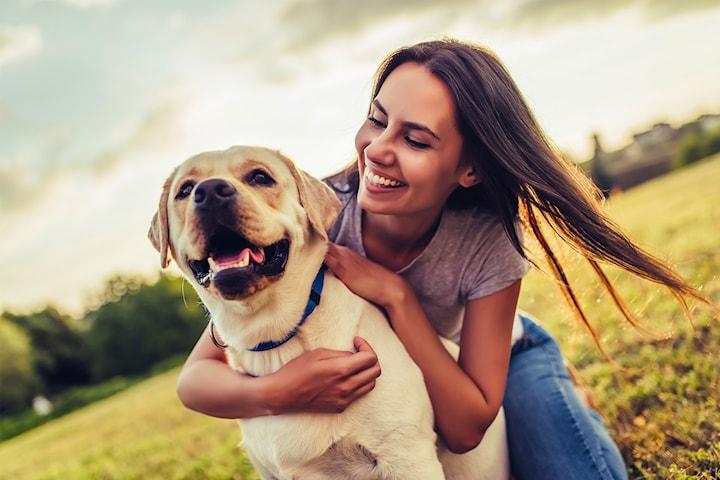Hundepsykologtime mot vanskelig og uhåndterbar atferd med Klemminghundar