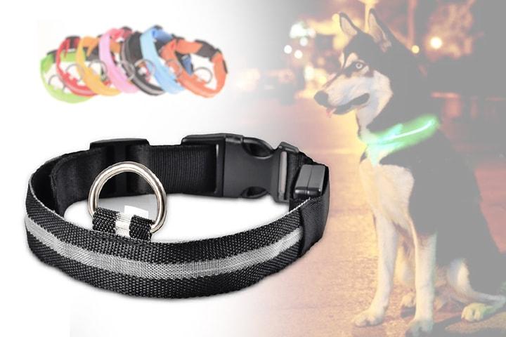 Hundhalsband med LED reflex